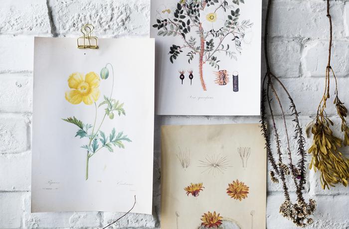 草花のイラストを描いてスワッグと一緒に、壁に飾っても雰囲気が出ます。