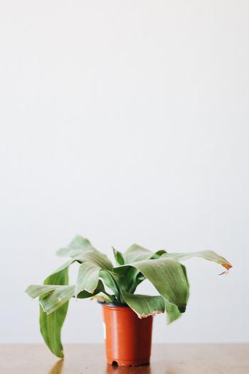 インテリア初心者さんにも簡単に取り入れやすいグリーンインテリア。今では100円ショップでも手に入ります。観葉植物や草花、フェイクグリーンがお部屋にあるだけで、何だか落ち着く空間になりますよ。