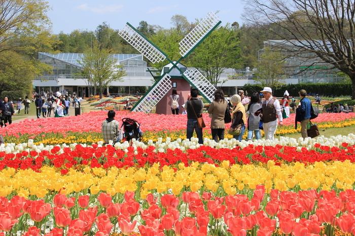 1976年に開園した兵庫県立フラワーセンターでは、一年間を通じて様々な花々が開花する植物園です