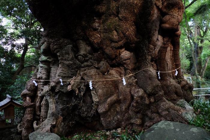 二千余年もの長きに亘って、落雷や暴風雨、天変地異など、様々な困難にも耐え抜いた「大楠」は、今もなお青々と茂り、漲る生命力を湛えて、成長し続けています。