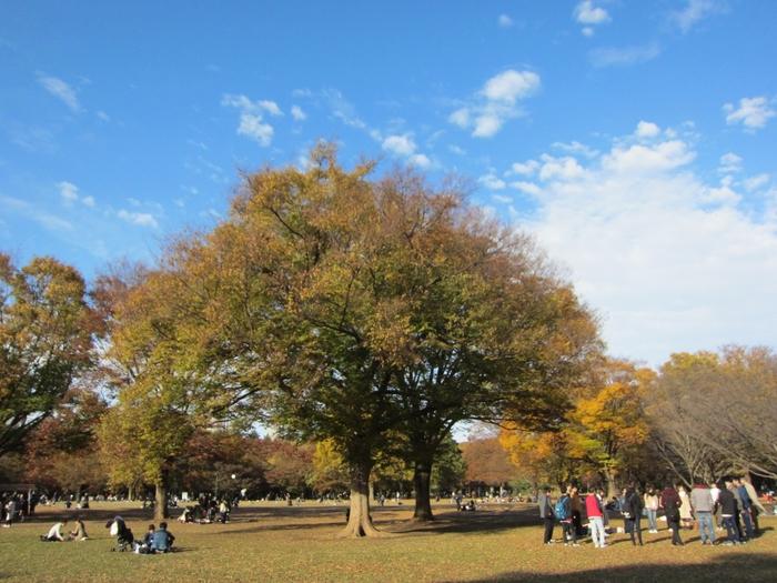 「代々木公園」は、JR原宿駅、千代田線代々木公園駅から徒歩3分の場所にある、ゆったり広い都立の公園です。入園料は無料で、昼間は散歩やピクニックを楽しむ人、夜はダンスや音楽を練習する人たちで賑わっています。