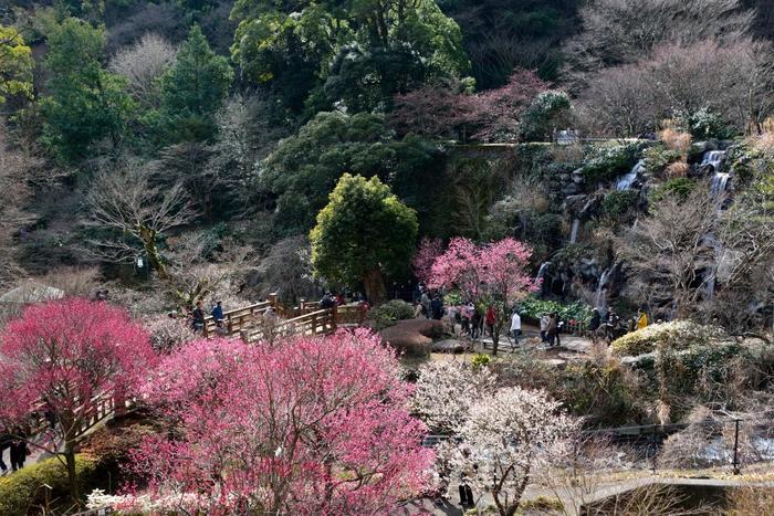 市街地の西方に位置する「熱海梅園」は、120年もの歴史を誇る庭園です。中央に初川が流れ、川の両岸の傾斜地を利用して梅園が整備されています。【画像左は、梅園五橋の一つ「香浮橋(こうふばし)」。左は「梅見の滝」。】