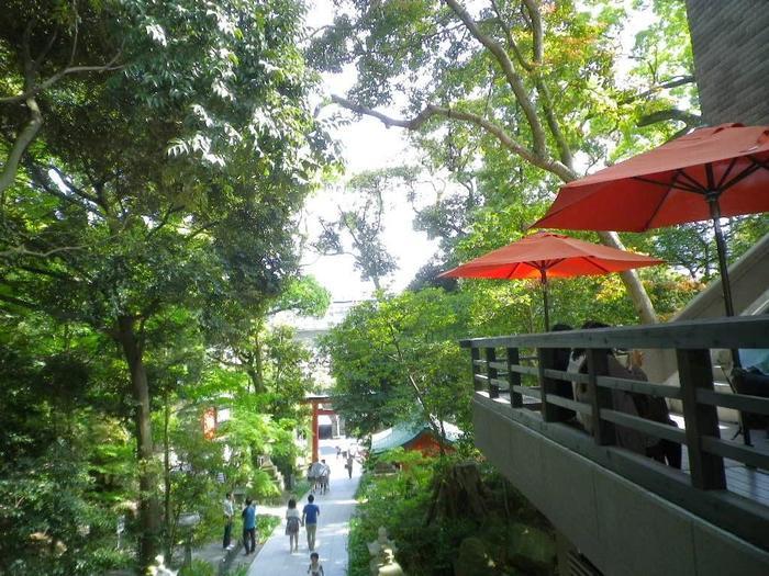 緑深く、水を湛えた「來宮神社」。清々しい境内を訪れれば、太古からの霊力を感じながら、静穏な一時を過ごせ、心身ともに休らえます。【5月初旬の新緑の頃の「來宮神社」の境内】