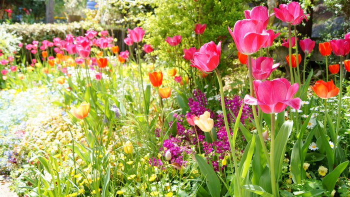 """1月から2月は、""""あたみ桜""""が1月中旬頃から開き出し、それに続いて""""梅""""も開花します。菜の花も斜面を黄色く染め、伊豆の花として知られる""""エリカ""""も園内至る所で咲き開きます。  3月から4月は、""""オオシマザクラ""""や""""ヤマザクラ""""が開花し、クロッカスやチューリップといった、春の花々が季節を謳歌するように咲き、バラのシーズンも始まります。【4月中旬頃園内】"""