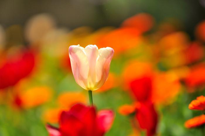 一年を通して花と景色が楽しめる「アカオハーブ&ローズガーデン」の詳細は、以下のサイトへ。【4月下旬頃の園内】