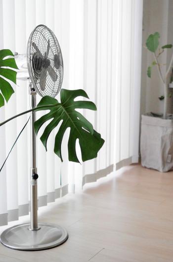 野暮ったく見えがちな扇風機も、メタル製ならかっこよくインテリアに馴染んでくれます。グリーンと並べてみるのもなかなか素敵です。