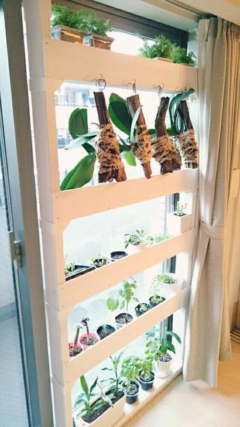 こちらも植物たちの最高の居場所に収納棚をDIY。鉢の高さに合わせた幕板は鉢の落下防止にも良さそうですね。