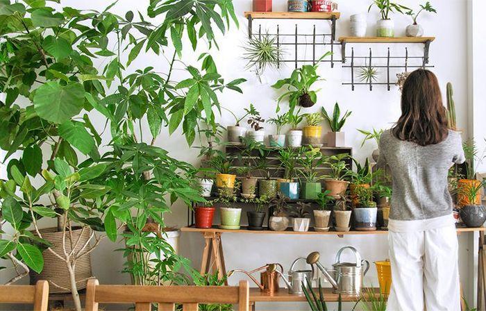 植物が育つためには光と水、きれいな空気が必要なので、それを置いておくだけで人は自然と周りをきれいにしようという気持ちになると言われています。