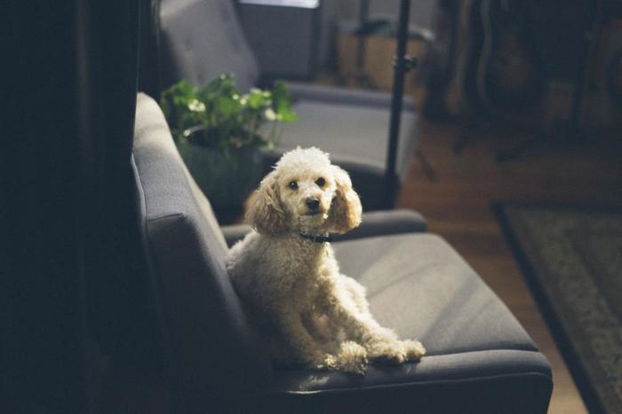 ゆったりと身をあずけられる、座り心地のよいマイチェアを用意します。手持ちの椅子や一人掛けのソファでも、フカフカのクッションを置いたり、触り心地のよいカバーリングに変えたりしても、「ヒュッゲ」な場所は作れます。愛するペットがいれば、いっしょにくつろぐ時間は幸せなことこの上ないですね。