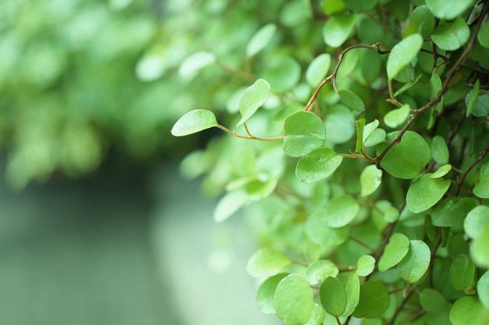 人はもともと自然の一部です。それを忘れ、人工的なものに囲まれて多忙な毎日を送っていると、心がギスギスしてしまうのも無理はありません。身近に自然を感じて、リラックスした心を取り戻しましょう。観葉植物を部屋に置いたり、花を生けたり、週末に森林浴に出かけるのもいいですね。