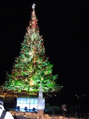 12月には金森倉庫のあるベイエリアでは、20mもある大きなクリスマスツリーが設置され、異国情緒あふれる函館がクリスマスムードいっぱいになります。