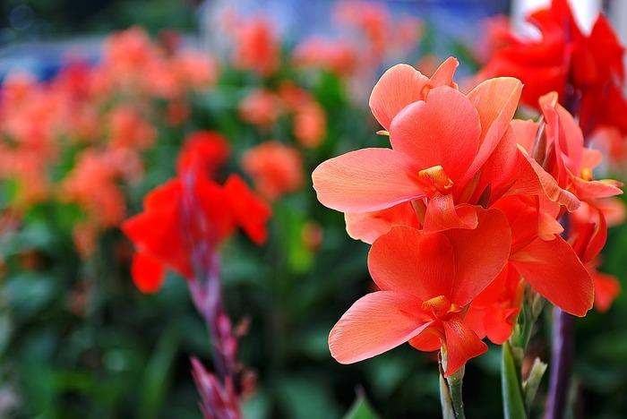 ダリア、グラジオラス、アマリリス…春植え球根には、誰もが知っている親しみやすいお花が多く見た目が華やかで、これからのまぶしい季節を鮮やかに彩ってくれます。あなたも、球根ガーデニング、始めませんか?