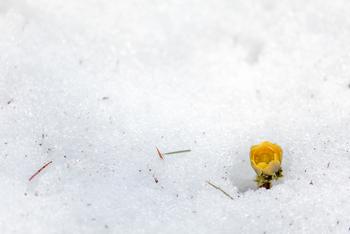 二十四節気の最初の節気で、暦の上ではこの日から立夏の前日までが春になります。まだまだ寒い季節ですが、この日の後に強く吹いた風が春一番となり、次第に雪が解けて春がやってきます。  九州地方からは梅のたよりが届きはじめ、日差しが少しずつ暖かくなっていきます。立春の前日である2月3日には節分があり、新しい年を迎える前に邪気を払い、新年の無病息災を願って「豆まき=魔滅」をします。