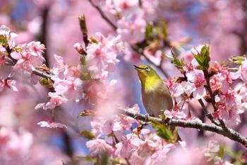清明は「清浄明潔(しょうじょうめいけつ)」の略で、すべてのものが穢れなく清らかで生き生きとしているということ。花が咲き乱れ、鳥の声が響き渡り、柔らかな風が吹き、空が青く澄み渡ります。夜はぼんやりと霞みがかかり、月が滲むことから、「朧月夜(おぼろづきよ)」と言われます。