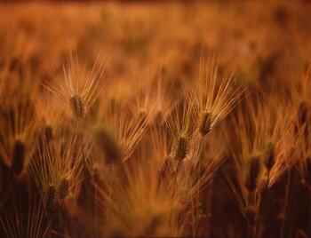 陽気がよくなり、草木が生い茂る季節です。秋にまいた麦の穂が黄金色に実ることから、麦秋(ばくしゅう)とも呼ばれています。この頃の梅雨入り前に降る雨を走り梅雨といい、梅雨が近づく合図ともなっています。