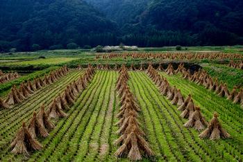秋の長雨が終わり、草木に本格的な露が降り始めます。稲刈りも終盤を迎え、農作物の最盛期を迎える頃です。各地では秋の祭りが多く開催され、北から順に紅葉の便りが届き始めます。
