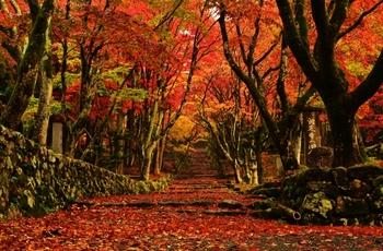 晩秋の季節となり、早朝には霜が降り始めます。朝晩の冷え込みが強くなり、山では紅葉する木々が多くみられるようになります。