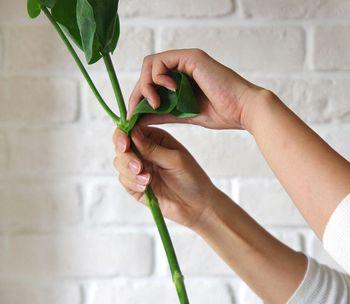 切り花は水を吸い上げるための根がないため、そのままでは水を吸い上げる力が弱い状態です。そこで、余分な葉や小さな蕾などはきれいに取り除き、できるだけ栄養が行き渡るようにしましょう。特に水に浸かる部分の葉が残っているとそこから腐り、水が汚れる原因となりますので、残さずに取り除きます。