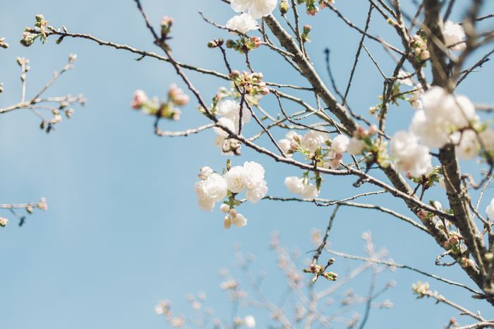 すべてを新調するのは無理だけれど…ひとつ加えるだけで「春」を呼びこんでくれるアイテム13選