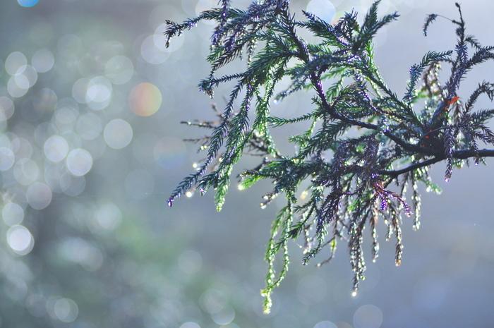 毎年、花粉の季節がくると鼻はヒリヒリ、マスクのこすれでピリピリ…と、不調が続いてしまいますよね。さらに、なんだかお肌がかゆくなったり、赤くなったりしませんか?