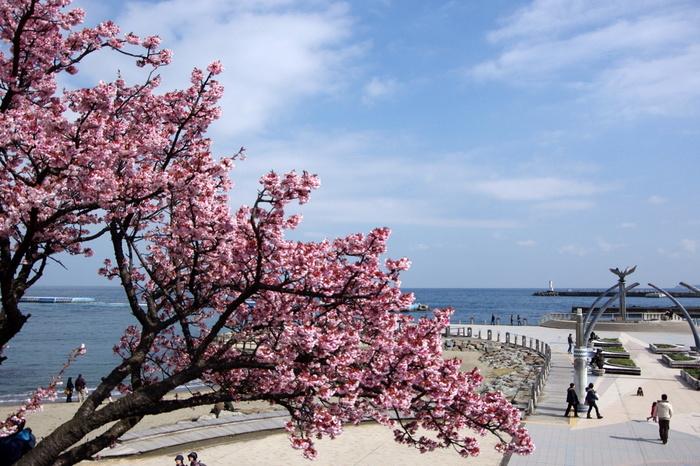 """「サンビーチ」とデッキの間には、恋人が愛を誓い合うモニュメントがある「ムーンテラス」があり、サンビーチと合わせて""""恋人の聖地""""に認定されています。  【画像は、3月初め頃の「ムーンテラス」。テラスの先端には、夜間にライトアップされる、恋人同士が愛を誓うモニュメントがあります。親水公園にも""""あたみ桜""""が植えられています。】"""