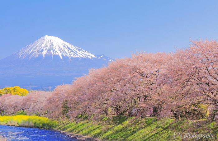 """身近にあるだけで、思わずほっこりしたり、元気をもらったり…。なんだか幸せな気分になる「富士山グッズ」。自分で楽しむだけでなく、大切な人へのプレゼントに選ぶと""""特別な想い""""も届きそうです。"""