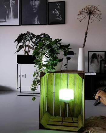 グリーンを置く箱の中に、照明を入れて。簡単に真似できそうですね。