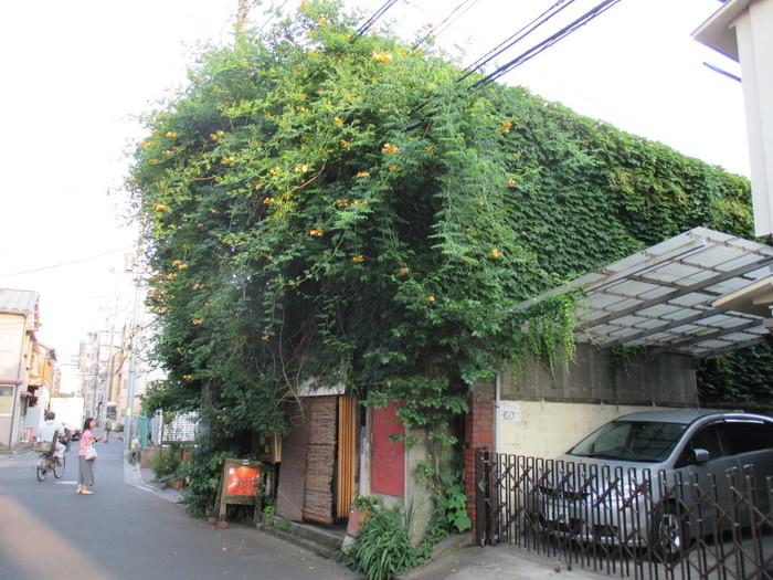 スカイツリーの最寄り駅、押上駅から歩いて約15分にある「SPICE Cafe(スパイスカフェ)」。築50年以上の木造アパートをリノベーションした、屋根を覆うツタが雰囲気たっぷりのお店です。