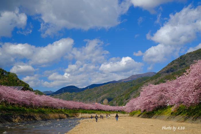 気軽に日帰りで楽しむのもいいけれど、せっかくならもっとゆっくり桜まつりや近辺のお店を楽しみたい!という方には一泊旅行もおすすめです。キレイな景色と、美味しい食事で目とお腹を満たしたら、良質な温泉で心身ともに癒されましょう♪