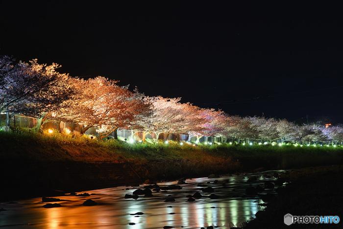 夜間は一部ライトアップも行っており、昼の桜とはひと味違った幻想的な雰囲気を楽しめます。昼間よりも冷え込みますので、あたたかい服装でお出かけくださいね。