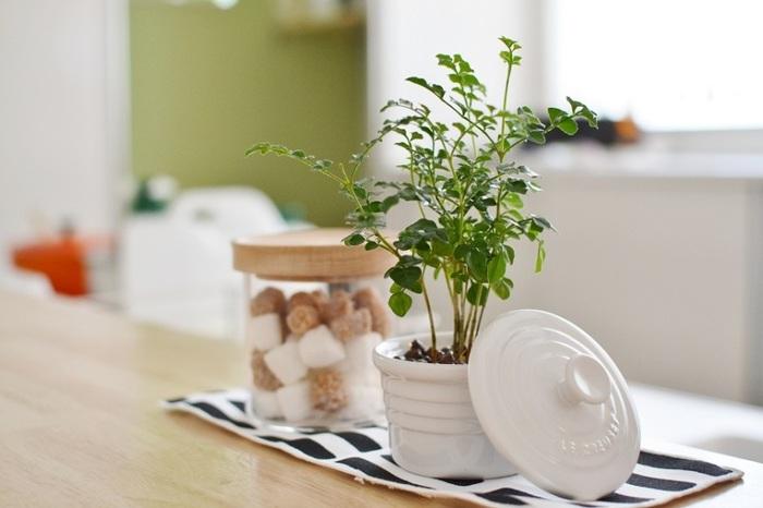 お砂糖ポットなどと同じようなサイズ感の観葉植物。  はじめて観葉植物をキッチンに取り入れる方は、他のキッチンアイテムと同じサイズ感のものを取り入れると比較的自然にアレンジできるかもしれませんね。