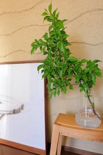 剪定した庭木をガラスの花器に挿すだけで、素敵なインテリアに大変身。枝ものは玄関の雰囲気をガラリと変えるのにぴったりです。ナチュラルにも和モダンにもできるので、季節に合わせたお気に入りの枝ものを見つけてみるのはいかがでしょうか?