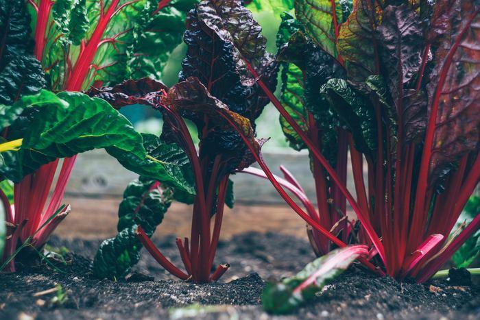 農薬や化学肥料を使わない、また多用しない土壌では、たくさんの微生物が生息しています。 微生物は土の中の有機物を分解する過程で多くのミネラル分を生みだします。このミネラル分が野菜の旨味に繋がり、甘くて味が濃いおいしい野菜が育つんです。