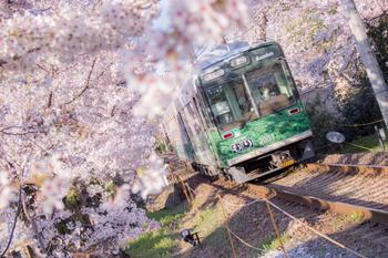 嵐電(京福電車)の「鳴滝駅」から「宇多野駅」間は、線路の両脇に桜の木が約200メートル並び、春にはのどかに花開きます。桜の間を小さな嵐電がゆっくりとくぐり抜ける様は、「桜のトンネル」さながら。  何駅乗っても同一料金なのも嬉しい。「北野白梅町」駅から乗るのがおすすめです。