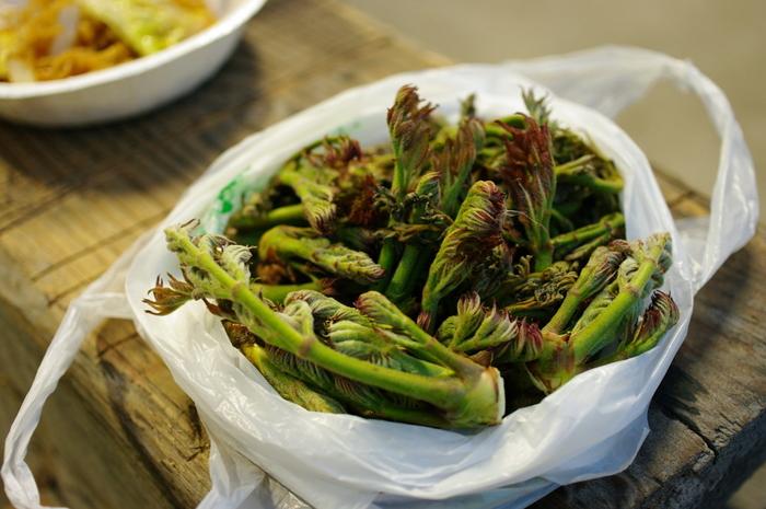 雑草が料理に変身!?季節の味を楽しもう!食べられる野草で作る【野草ごはん】