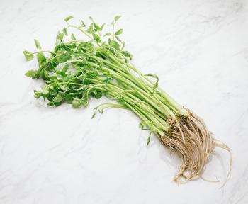 セリ鍋では特に根っこが美味しいとのことですが、野草のセリは栽培のものほど立派な根はできません。来年採取することを考えて、根から上をカットしても良いでしょう。