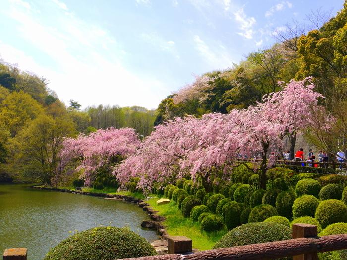 3月下旬から4月上旬にかけては桜や枝垂れ桜、夏の緑陰、11月下旬から12月上旬には秋の紅葉、冬の木立も美しく季節を楽しませてくれます。遊歩道をのんびりお散歩してリフレッシュできそうです。