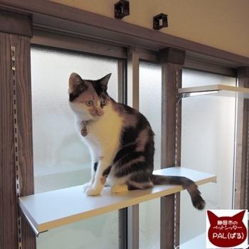 壁に穴をあけずにDIYができるディアウォールを使えば、賃貸でもキャットウォークが作れるんです。高さが調節できるから、作った後に猫の様子を見てちょうどいい場所を見つけてあげられる安心感もあります。