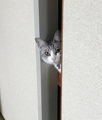 日本の住宅に欠かせない「押入れ」。ブロガーさんのアイデアを参考に、空間を有効利用しスッキリとした収納を目指してみませんか?