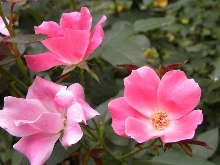 中庭には可憐な花々が植えられた洋風庭園が広がっており、当時の意匠を再現したクラシカルな館内は、美術館として開放されています。