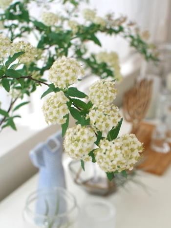 清楚な白い花びらがこんもりと集まった愛らしいお花ですよね。淡いトーンの小物と合わせると春らしい空間が作れます。 こちらは、満開になって、花びらが散る様子も想定したディスプレイなのだそう。