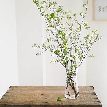 庭やベランダなどで枝モノを植えている人は、ぜひお部屋で飾って楽しむことをオススメします。 活け方には、いくつかポイントがあるそうなので、それを押さえればDAHLIAさんのように、素敵なディスプレイが楽しめるはず。 ポイントの1つは、花器選び。背が高くて口が狭いものが活けやすいのだとか。