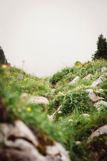 食卓や棚にちょこんと飾るだけで心が癒される草花。記事で紹介したディスプレイを参考にして、「花を飾る」ことを難しく考えず、好きな花を自由に活けてみてくださいね。