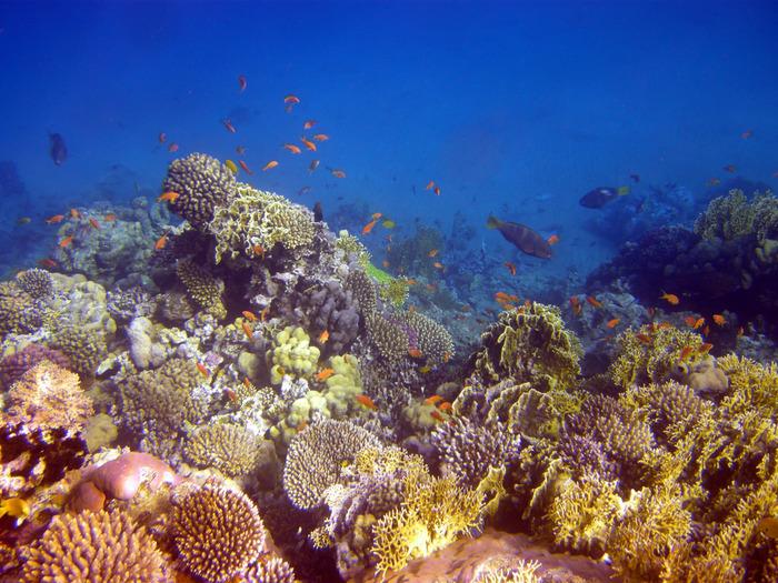港町アカバに面したアカバ湾は、ダイビングスポットとして人気があります。抜群の透明度、色とりどりの珊瑚礁、美しい熱帯魚たち……。アカバ湾の海中では、竜宮城のような景色が待っています。