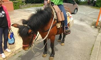 ポニーと和種馬(わしゅうま)、2種類の小柄なお馬さんがいます。 牧場では「馬上弓くらべスクール」が開講されており、市主催の「小田原城馬上弓くらべ大会」への出場者も出しています。