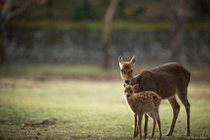 鹿!  そして、キナリノ女子も喜ぶ♡かわいくて美味しいスイーツがあるのをご存知ですか?  今回は、奈良で食べたいかわいくて美味しいスイーツ店をご紹介していきます♪