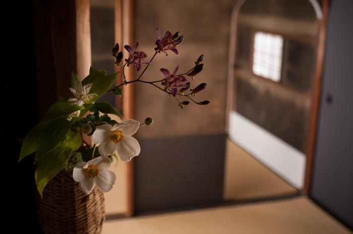茶花とは、お茶席に飾られる花のこと。茶花には、日本の細やかな四季のうつろいを感じ取り、野に咲く花の本質的な美しさを表現する役割があります。季節の山野草を数多く取り入れ、自然の姿を活かした生け方は、 茶室だけでなく普段の暮らしにも取り入れたいシンプルな美しさをたたえています。