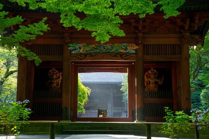"""有名なお寺が点在し、多くの観光客で賑わう鎌倉ですが、""""朝の風景""""をご存知でしょうか。朝の少し冷ややかで澄んだ空気のなかで、寺社仏閣はしんと静か。参道を歩けば、周りの自然が朝の光に照らされて、生き生きとした美しさを見せてくれるでしょう。 海は穏やかで、海岸を歩けば、やさしい潮騒に心が和みます。 早起きしてでも見る価値のある景色が、朝の鎌倉にはたくさんありますよ。"""
