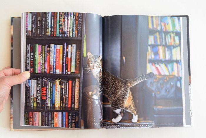 ニューヨークの大都会でマイペースに飄々と生きる猫たちを見ていると、肩の力が自然と抜けていくよう。