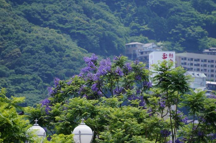 また熱海は、季節を問わず楽しめる場所。 1月から桜が咲き出し、早春から梅が彩り、新緑の頃になれば、ブーゲンビリアやジャカランダも日差しに輝きます。そして、いつ訪れても、あなたの身体に温もりをもたらす温泉が豊富に湧き出ています。  【「熱海親水公園」付近国道135号線沿いに咲くジャカランダの花。「ジャカランダ」は、南米産のノウゼンカズラ科の花木。熱海では、毎年6月初旬から約1ヶ月開花します。】